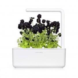 Smart Garden - Sadzonka (Czarny Bratek)