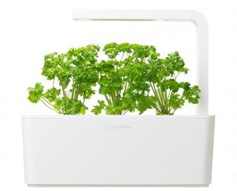 Smart Garden - Sadzonka (Pietruszka)
