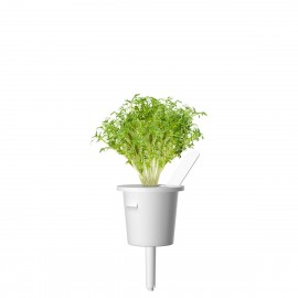 Smart Garden - Sadzonka (Rzeżucha)