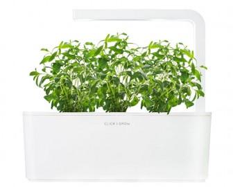 Smart Garden - Sadzonka (Hyzop lekarski)