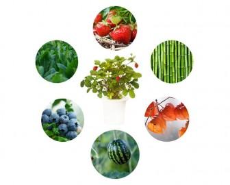 Smart Garden Experimental - Uprawiaj cokolwiek